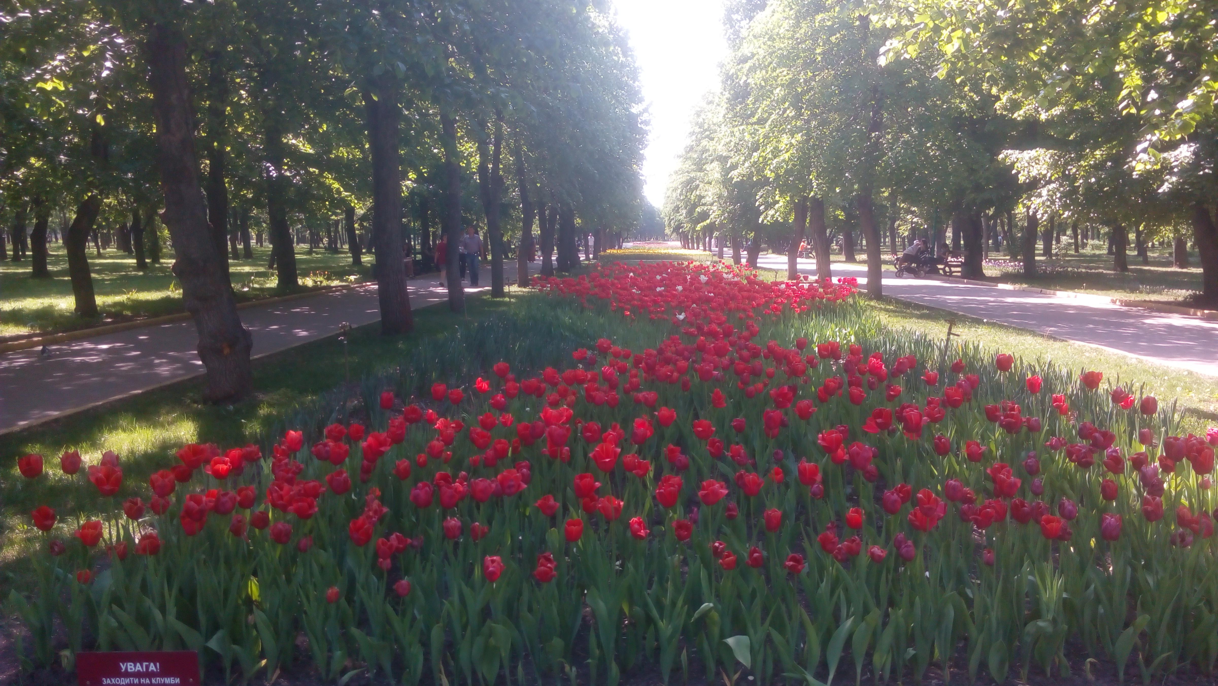 Экскурсия в Кропивницкий на бал тюльпанов и Софиевский парк в Умани
